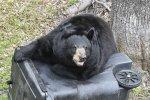 bear-fwc.jpg