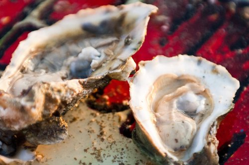 Oysters, Oysters, and More Oysters! | SoWal com